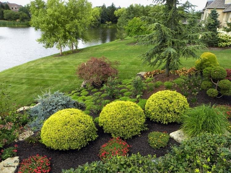 Круглые хвойные растение - аккуратная стрижка
