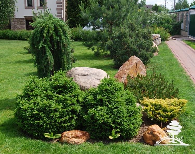 Сочетание хвойников и камней на участке