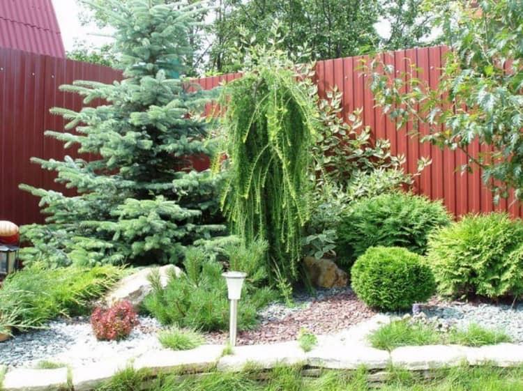 Плакучие хвойные растения в ландшафтном дизайне