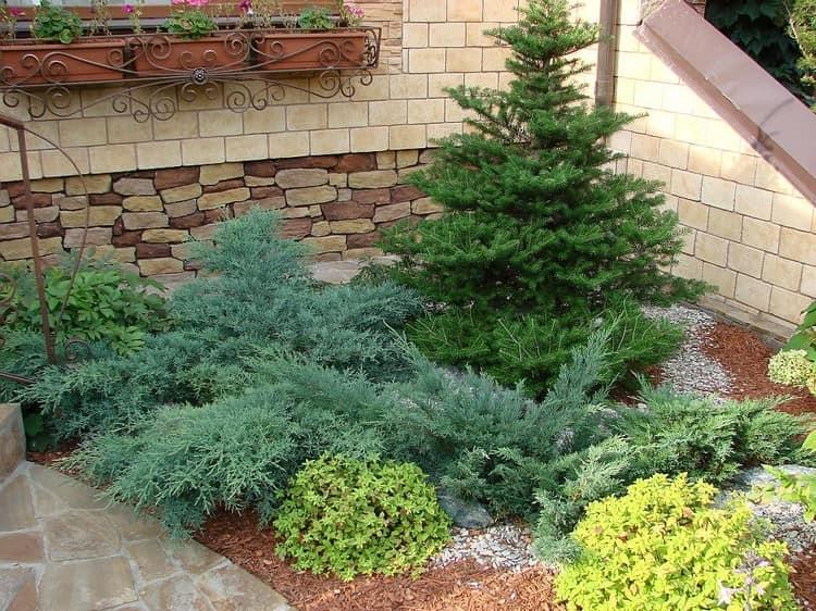 Ель и другие хвойные для дизайна сада
