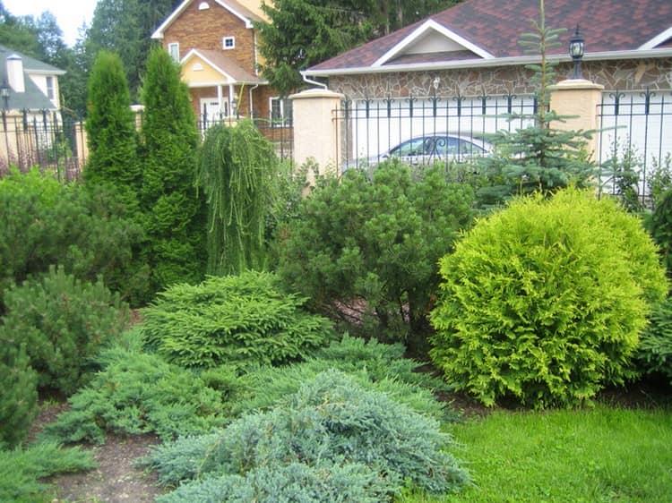 Хвойные в саду - фото ландшафтного дизайна