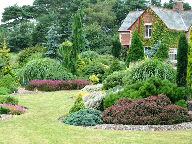 Хвойные в саду и ровный газон вокруг них