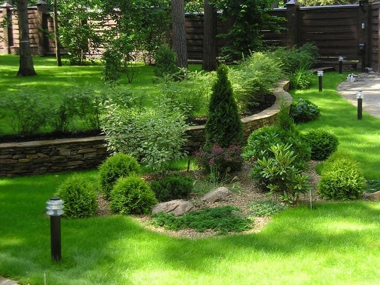 Где и как посадить хвойные в саду - фото