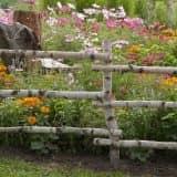 Забор и цветы в кантри саду