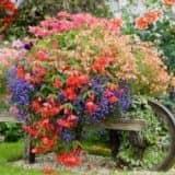 Телега с цветами в саду