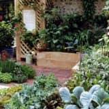 Растения в саду кантри