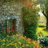 Цветущий кантри сад