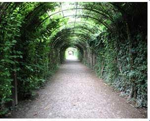 Пергола тунель