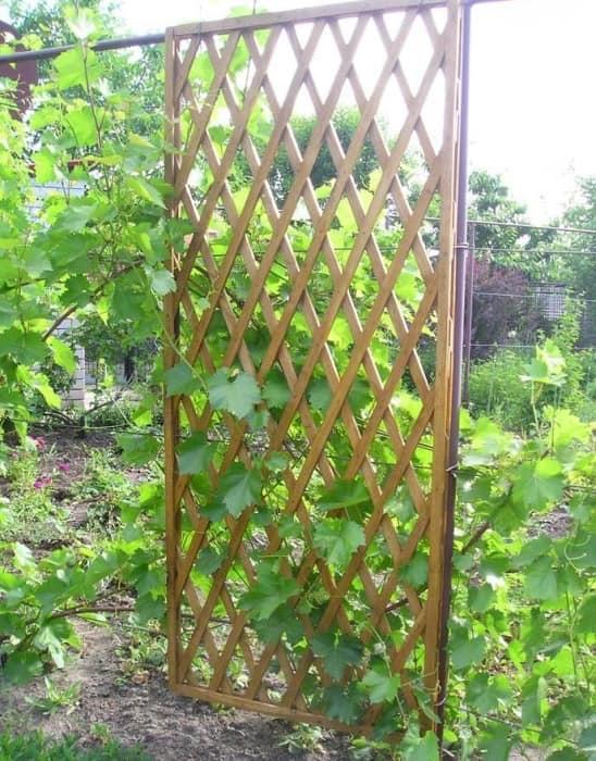 Пергола ширма отделяющая участки сада