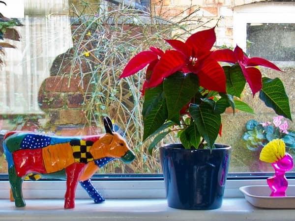 Цветы, статуэтки и другие способы украсить подоконник и окно