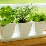 Зеленые растения на подоконнике