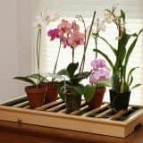 Украшаем подоконник растениями