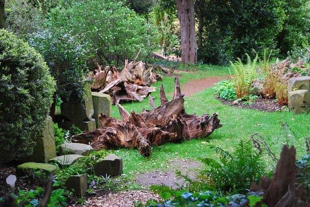 Рутарий: корни и коряги в декора сада