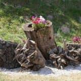 Цветы в старых пнях