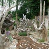Большие корни в саду