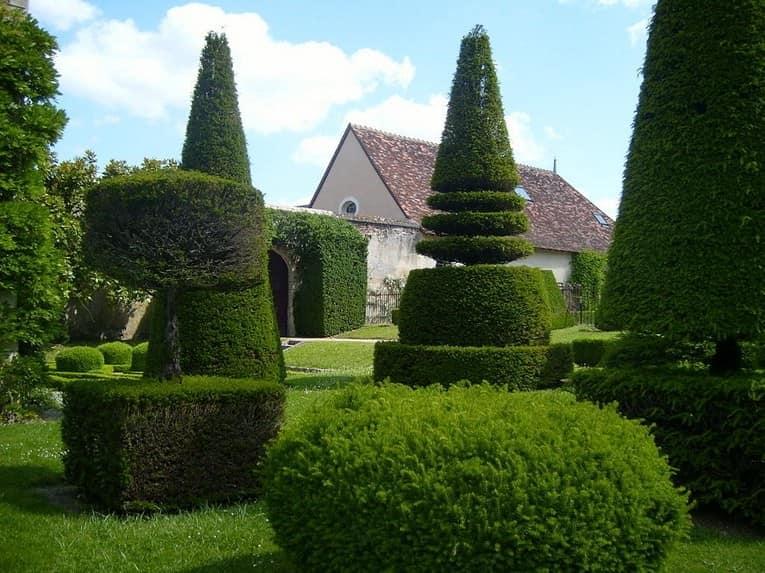 Топиарные сады: растения причудливых форм своими руками фото