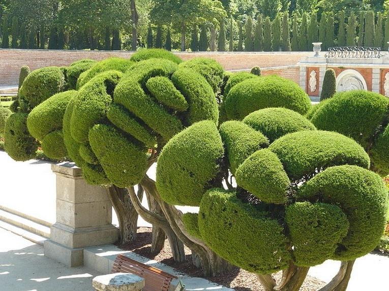 Топиарий: необычная форма растений для декора сада
