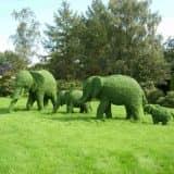 Топиарий слоны