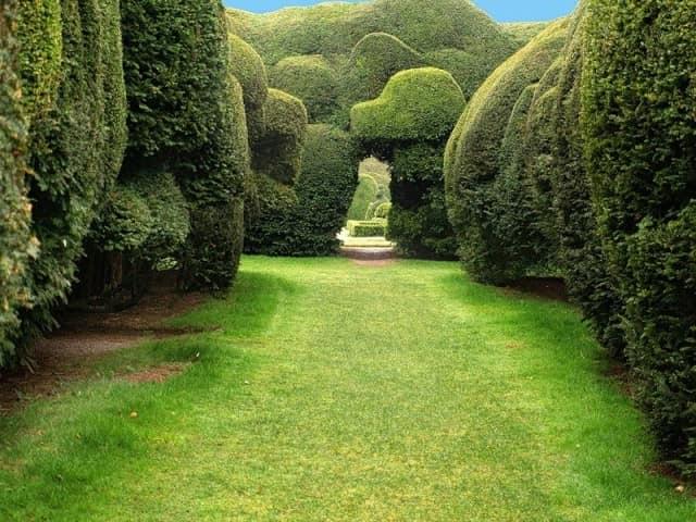Топиарные сады - абстрактные формы, стены, арки