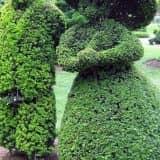 Скульптуры из расений