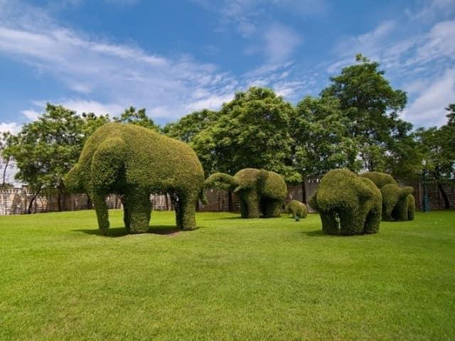 Топиарий - животные. Слоны на лужайке.