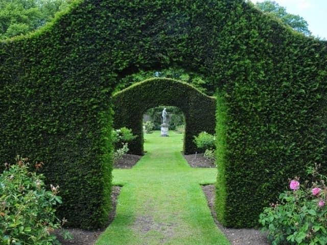 Топиарий в ландшафтном дизайне - арки и коридоры