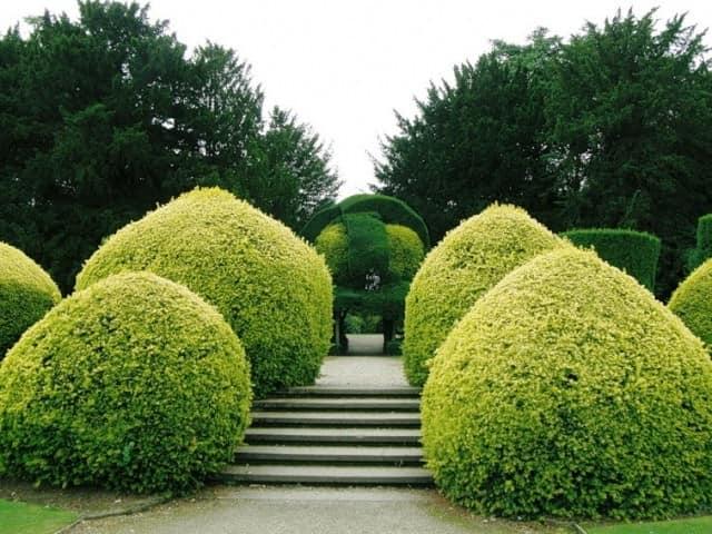 Декоративная стрижка растений: как сделать топиарий