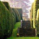 Лестница в топиарном саду