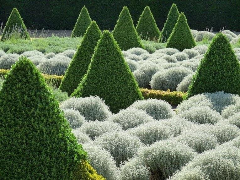 Топиарные сады: треугольные пирамиды из курстарников