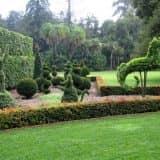 Делаем скульптуры из растений