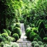 Топиарный сад своими руками