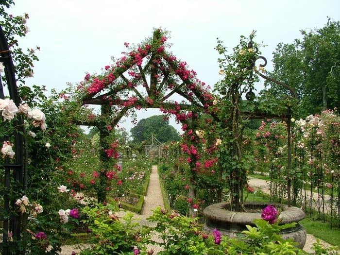 Вертикальное озеленение для садовых арок, ворот и забора на даче