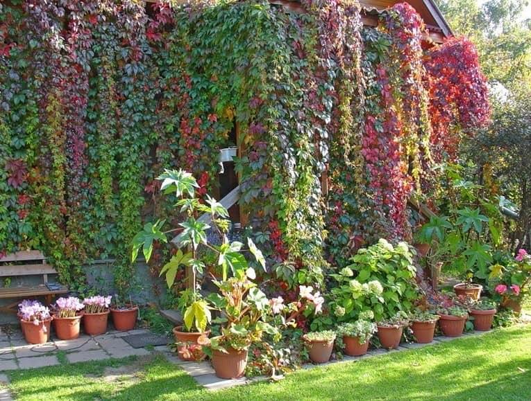 Как полностью скрыть стены с помощью вертикального озеленения фото