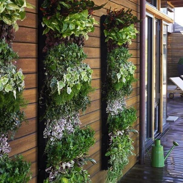 Вертикальный огород: зелень и пряные травы фото