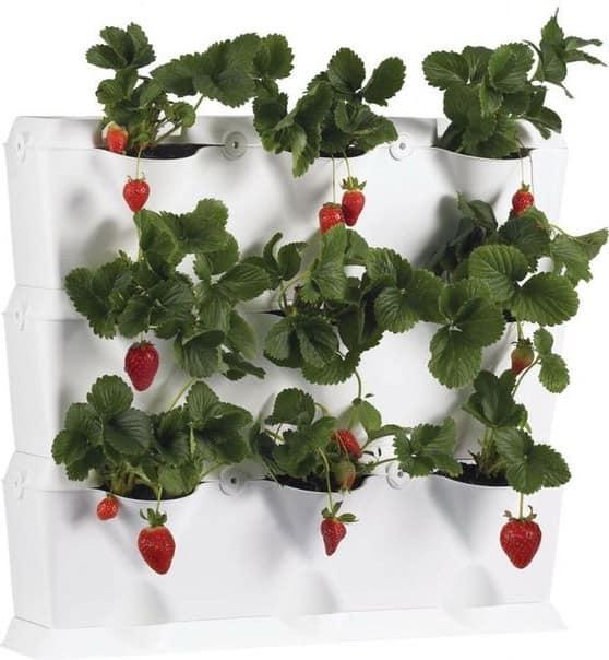 Вертикальное выращивание клубники на стене дачи
