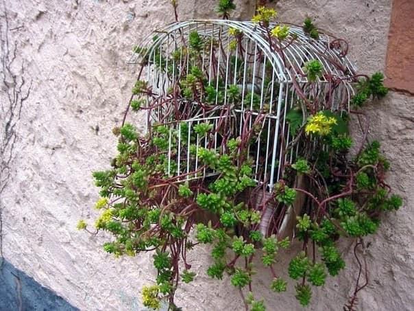 Подвешиваем растения в горшках или клетках - озеленяем стены дома