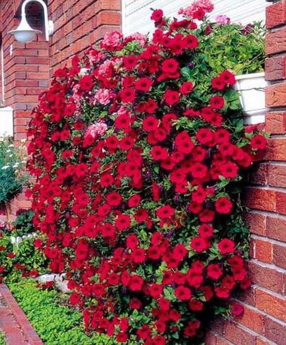 Цветы на подоконнике в вертикальном озеленении ваших стен