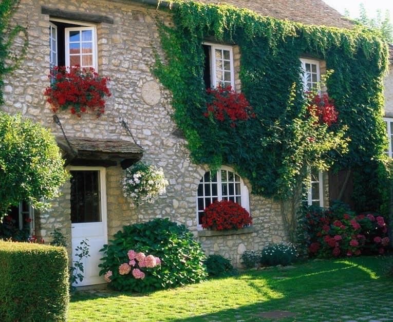 Вертикальное озеленение стен: вьющиеся растения и цветы в горшках и на подоконниках