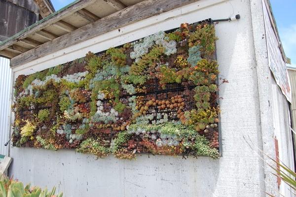 Подвесные поддоны с суккулентами для озеленения дачных стен