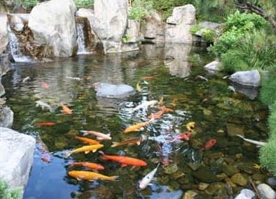 Золотые рыбки в прудике под водопадом