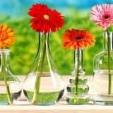 Стеклянные вазы на окне