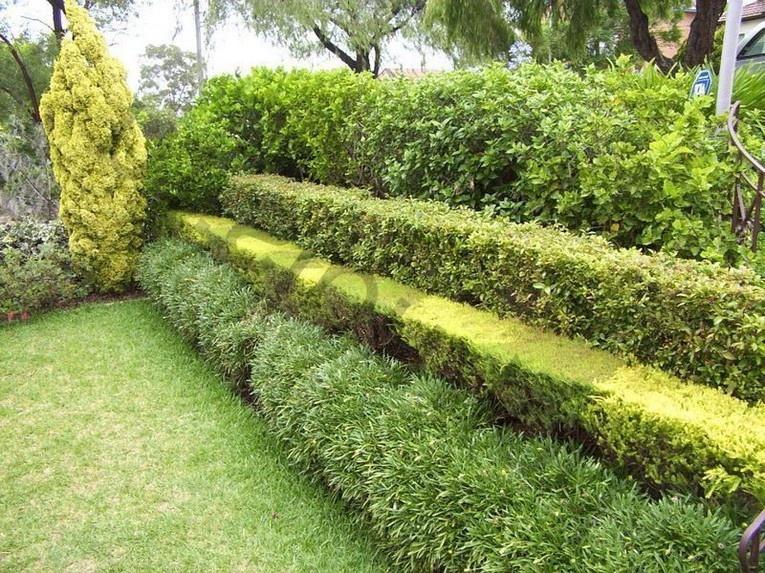 Кустарники для живой изгороди в несколько уровней фото