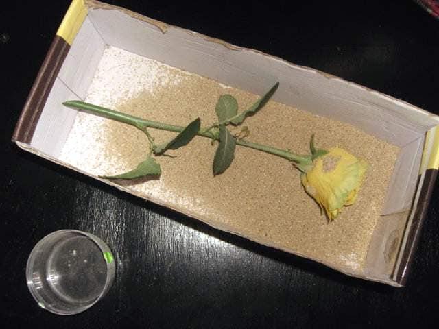 Высушенные в песке цветы надолго сохраняют свой естественный цвет