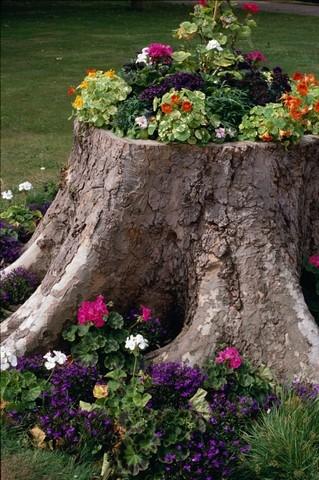 Клумба из старого пня может стать ключевым элементом декора в ландшафтном дизайне дачи
