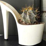 cactus03