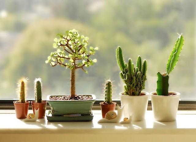 cactus07