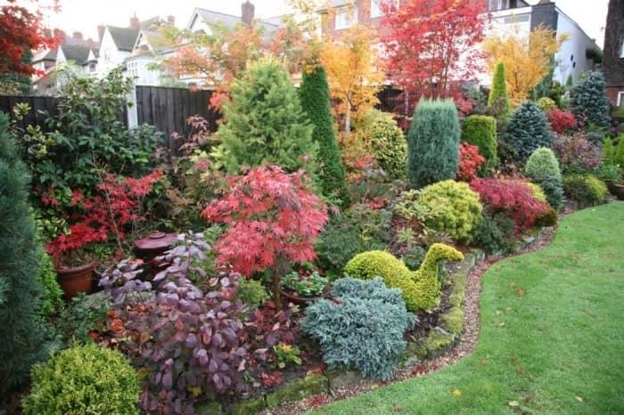 Осенние цветы, злаки и растения для сада