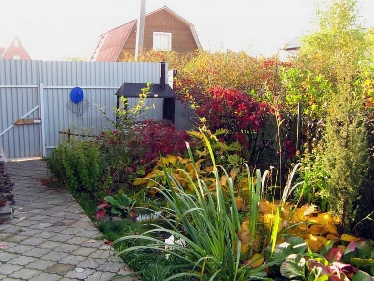 Яркие цветы - главное украшение дачу и сада осенью