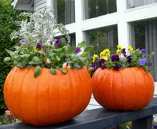 Цветочные горшки и вазоны из тыквы для декора дачи