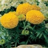 cvety 10